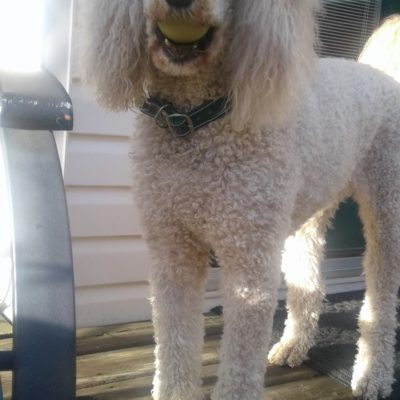 Dog with dog collar